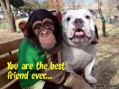 Here we see a chimp named Pankun (who's a star in Japan along with his bulldog friend James) experiencing magic for the first time. Animals And Pets, Baby Animals, Funny Animals, Cute Animals, Funny Dogs, Cute Dogs, Unlikely Friends, Primates, Animal Pictures