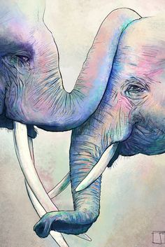 Elephant Love by SuperPhazed (print image)