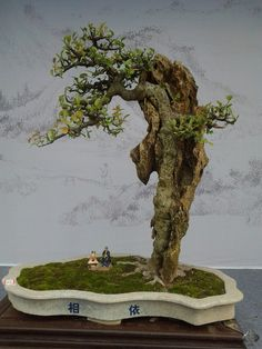 Shows and exhibitions - 2013 - Bonsai Empire