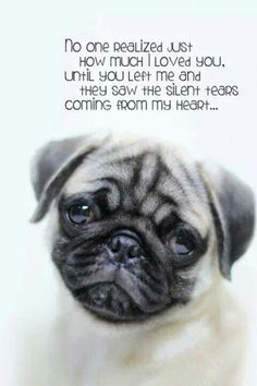 The pugs are having such a hard time without you too. How can I console them when I am barely holding on myself?it hurts. Pug Quotes, Animal Quotes, Pug Pictures, Pug Pics, Pugs And Kisses, Cute Pugs, Funny Pugs, Pug Puppies, Pug Love