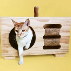 Modern Cat Furniture, Multifunctional Furniture, Pet Furniture, Dining Furniture, Furniture Design, Cabin Design, Dog Cat, Pets, Milk