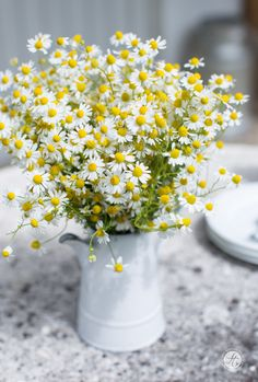 Camomile bouquet, beautiful meadow flowers in summer - Meadow Flowers, Wild Flowers, Floral Centerpieces, Floral Arrangements, My Flower, Flower Pots, Flower Table, Daisy Party, Daisy Love