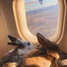 Bunny World ( Super Cute Animals, Cute Little Animals, Cute Funny Animals, Cute Baby Bunnies, Funny Bunnies, Cute Babies, Pet Bunny Rabbits, Funny Animal Videos, Animals And Pets