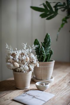 91 Magazine independent Christmas gift guide - Paper Thin Moon growing gift sets Leafy Plants, Small Potted Plants, Hanging Plants, Dried Flower Bouquet, Dried Flowers, Christmas Gift Guide, Christmas Gifts, Thyme Flower, Large Plant Pots