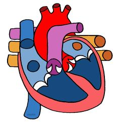 The Human Heart - Free Science Lesson Plans, Activities, Powerpoints, Interactive Games