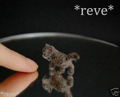 OOAK Realistic Handmade Curious Kitten Miniature Dollhouse 1 12 Sculpture