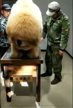 See more ideas about Cutest animals, Fluffy animals and Funny animals. This is the most adorable thing I have ever seen. Why dogs are the best of all things Funny Animal Pictures, Funny Cute Little Animals, Cute Funny Animals, Cute Cats, Cute Animal Videos, Funny Animal Pictures, Funny Animal Gifs, Fluffy Animals, Cute Fluffy Dogs, Big Dogs