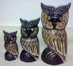 Owl Families