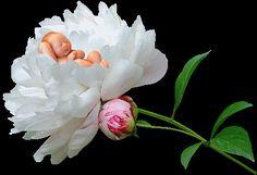 imagines de flores para mi bebe | Recados e mensagens para facebook de bebes, dormindo, nenem, criança ...