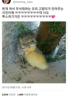 We love animals. Cute and funny animal pictures and gifs Cute Funny Animals, Cute Baby Animals, Funny Cute, Animals And Pets, Animals Photos, Cute Cat Gif, Super Funny, Cute Kittens, Cats And Kittens