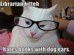 Library Cat - librarian kitteh hates books with dog ears. Library Memes, Library Quotes, Library Books, Library Posters, Library Events, I Love Books, Good Books, Books To Read, My Books