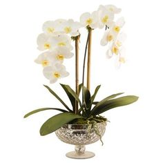 """Check out this item at One Kings Lane! 25"""" Phalaenopsis in Footed Bowl, Faux"""