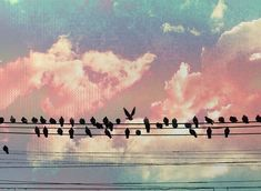 Pink sky, Birds on a wire. Facebook Cover Images, Facebook Timeline Covers, Pink Photography, Vintage Photography, Photo Wallpaper, Wallpaper Backgrounds, Wallpapers, Capa Do Face, Youtube Banners