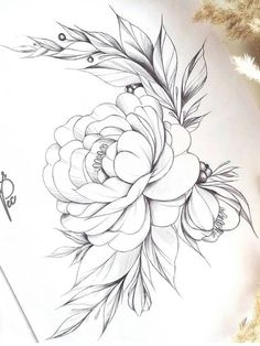 Beautiful Peonies Drawing - Beautiful Peony Rose Sketch Flower Drawing Peony Drawing Peony Pictures Art Drawing Of Beautiful Peony And Green Leaves 32 Ideas Flowers Peonies Drawi. Rose Sketch, Flower Sketches, Drawing Sketches, Drawing Ideas, Sketching, Flower Tattoo Designs, Flower Designs, Peony Flower Tattoos, Peony Drawing