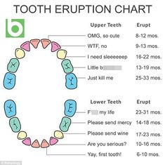 Pas Have Been Sharing A Hilarious Baby Teething Chart That Comes With Helpful Annotati