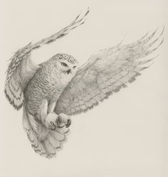 snowy owl by Vanessa Foley                                                                                                                                                     More