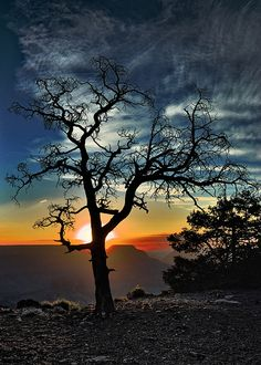 The Tree At Yaki Point - awesome scenery