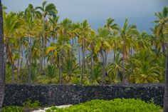 Capture the Colour Photo Contest - Green (Big Island of Hawaii)