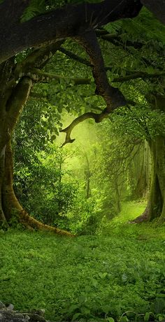 Stairway Decorating, Forest Background, Nature Aesthetic, Aesthetic Green, Magical Forest, Design Set, Fantasy Landscape, Fantasy World, Beautiful Landscapes