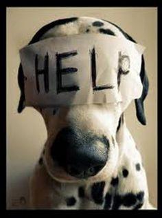 """""""O GRITO DO BICHO"""": Maus tratos a animais: 8 casos por mês - DF... #ogritodobicho #falabicho"""