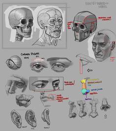 Digital Painting Tutorials, Digital Art Tutorial, Art Tutorials, Drawing Tutorials, Art Reference Poses, Drawing Reference, Male Model Face, Manga Tutorial, Anatomy Art