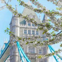 Beautiful spring in London by @j_r_photography // #london #londoncity #britain #bigben #towerbridge #instalondon