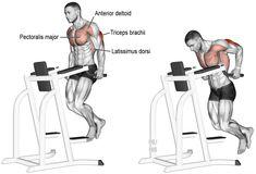 Comment effectuer les Dips triceps