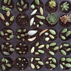 Compañía Botánica Propagating Succulents, Succulent Gardening, Planting Succulents, Potted Plants, Indoor Plants, Planting Flowers, Inside Plants, Concrete Garden, Family Room Decorating