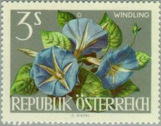 Stamp%3A%20Japanese%20Morning%20Glory%20(Ipomoea%20nil)%20(Austria)%20(Flowers%20Show%20Vienna)%20Mi%3AAT%201149%2CSn%3AAT%20723%2CYt%3AAT%20987%2CAFA%3AAT%201049%2CANK%3AAT%201179%20%23colnect%20%23collection%20%23stamps