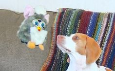 Dog Battles an Antagonizing Furby Toy That is Dangling on a String