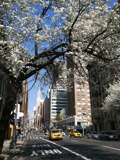 Spring has sprung in NYC