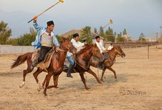 Horses of Azerbaijan Animals And Pets, Camel, Horses, Prints, Pets, Camels, Horse, Bactrian Camel