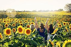 a new photo taken by j.b.__photography! Sunflower Field Photoshoot with @redhairdontcare__ http://ift.tt/1ReleXI - http://ift.tt/1HQJd81
