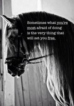 The most important role of equestrian clothing is for security Although horses can be trained they can be unforeseeable when provoked. Riders are susceptible while riding and handling horses, espec… Foto Cowgirl, Inspirational Horse Quotes, Motivational Quotes, Horse Riding Quotes, Horse Jumping Quotes, Riding Horses, Equestrian Quotes, Rodeo Quotes, Equine Quotes
