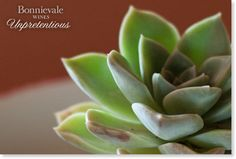 Win a weekend for 2 in Bonnievale Cacti, Wines, Succulents, Plants, Cactus Plants, Succulent Plants, Planters, Plant, Planting
