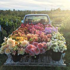camionnette remplie de fleurs
