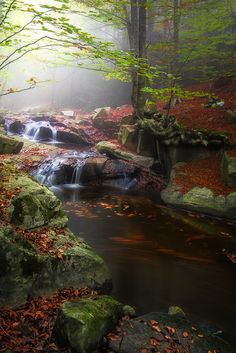 ~~AUTUMN IN FOREST by Lluis  de Haro Sanchez~~