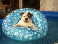 Dog Pool Floats, Dogs, Animals, Water, Gripe Water, Animales, Animaux, Pet Dogs, Doggies