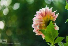 Sun call by fgombert. Please Like http://fb.me/go4photos and Follow @go4fotos Thank You. :-)