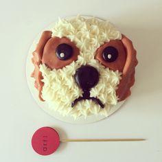 cavalier king charles spaniel cake