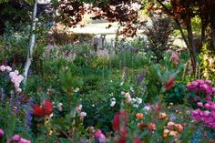 Beneath the branches of silver birch and Prunus nigra, pink and purple penstemons mingle with roses and gladioli. A hedge of Callistemon 'Endeavour' separates the garden from the paddocks beyond.  Photography Claire Takacs
