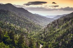 Everyday is a good day to be in the Smokies!