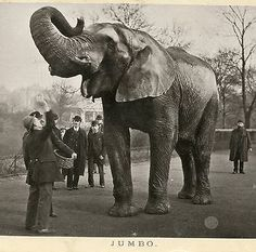 """historical-nonfiction: """"The word """"jumbo"""" comes from the name of Jumbo the circus elephant. Jumbo was hit by a train and killed on September 1885 in St. A statue was. Jumbo The Elephant, Grey Elephant, African Elephant, Barnum Circus, Barnum Bailey Circus, Pt Barnum, St Thomas, Film Tim Burton, Elephant Wallpaper"""