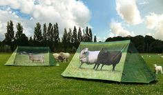 'Animal Farm' Sheep Design Camping Tent | FieldCandy