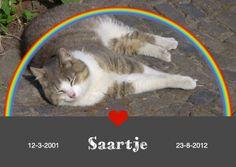 Kat, poes - pussy cat. Rouwkaart huisdier, regenboog met hart. Mourning card pet animal, rainbow with heart. Change text and place your own picture.  http://www.kaartje2go.nl/kaartencollecties/creagaat---dieren-rouw?sk_id=161