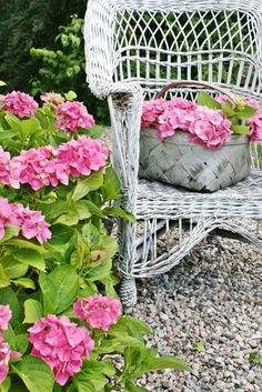 I wish I could get hydrangea to grow in my yard - I love pink flowers & especially these with the old wicker chair