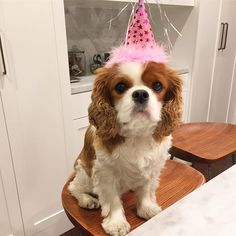 Happy 2nd birthday, sweet Olive. We love you so very much! 🎉🐶🎂