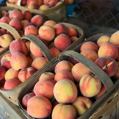 Southern+Peach+Fragrance+Oil
