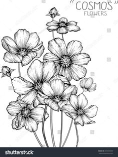 Draw Flower Patterns cosmos flowers clip art or illustration. Flower Pattern Drawing, Flower Art Drawing, Flower Line Drawings, Flower Sketches, Floral Drawing, Plant Drawing, Flower Patterns, Art Sketches, Art Drawings