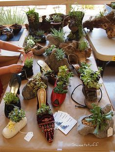 OMG brilliant!! Succulent gardens in old mismatched shoes!